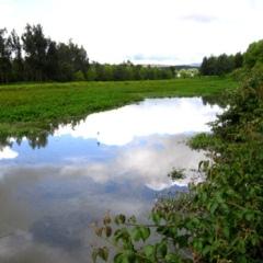 Espejo de Agua. Foto de La Silla Vacía