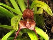 orquidea edwar guarin proaves