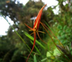 orquidea Edwar Guarin