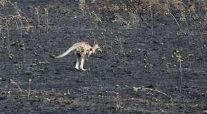 Australia deforestación