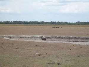 Sequía en el llano colombiano en el 2014